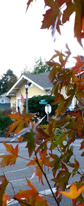 Leaf_house