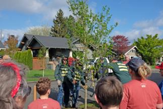 TreePlant18 (4)