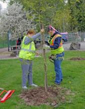 TreePlant18 GS (6)