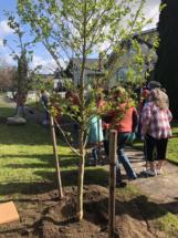 TreePlant 18 REI (6)