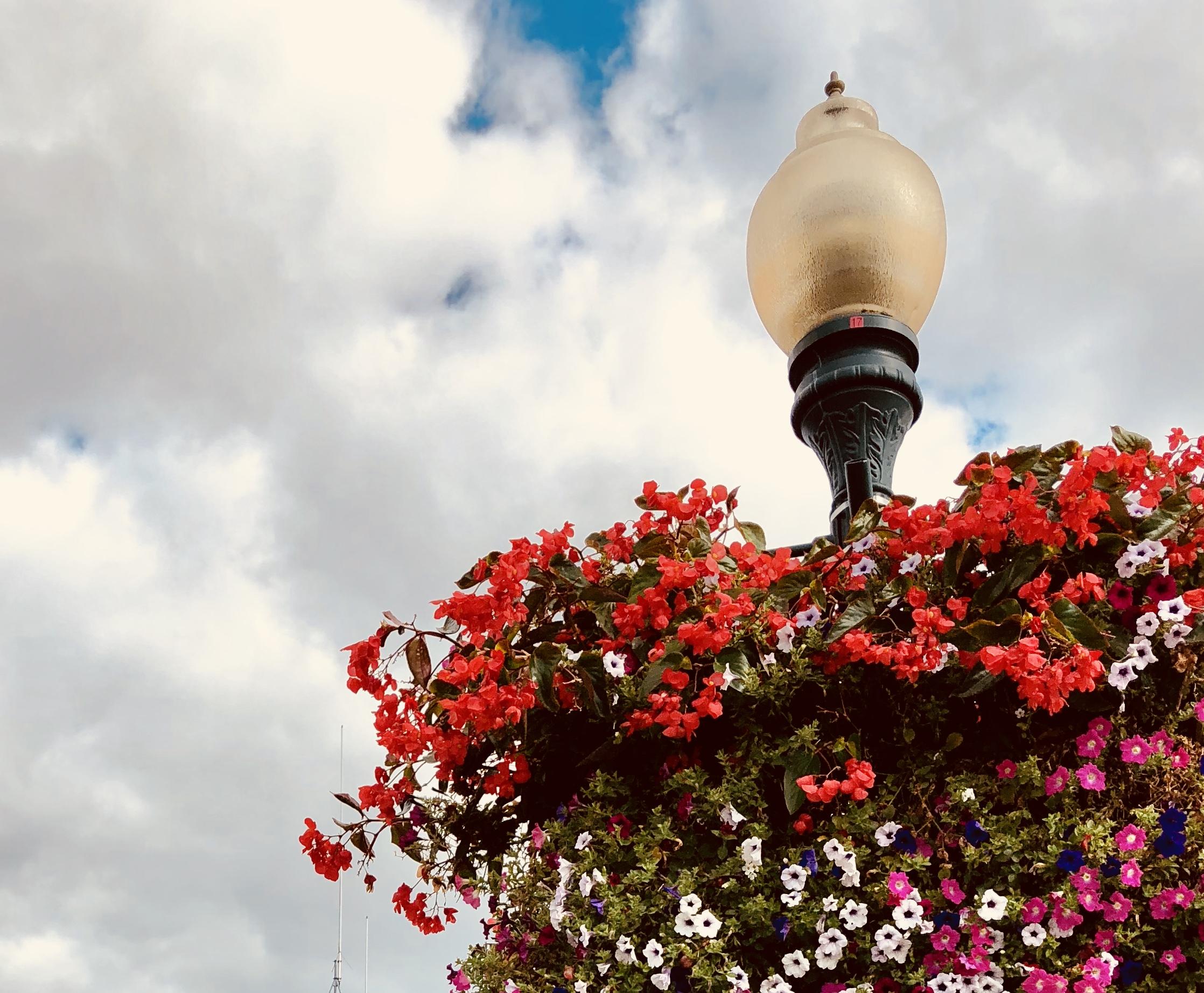 flowers lamp