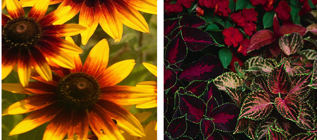 Flowers-sun-v-shade