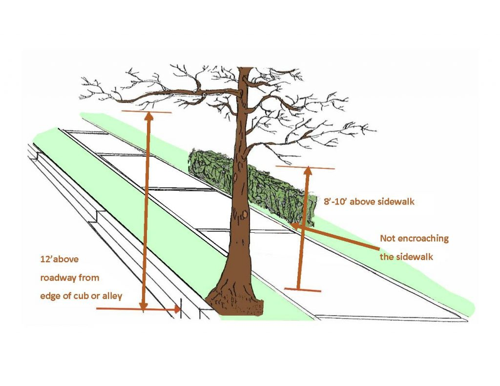 Graphic showing tree  branches should be 12 feet above the roadway, 8 to 10 feet above sidewalks with shrubs not encroaching the sidewalk.