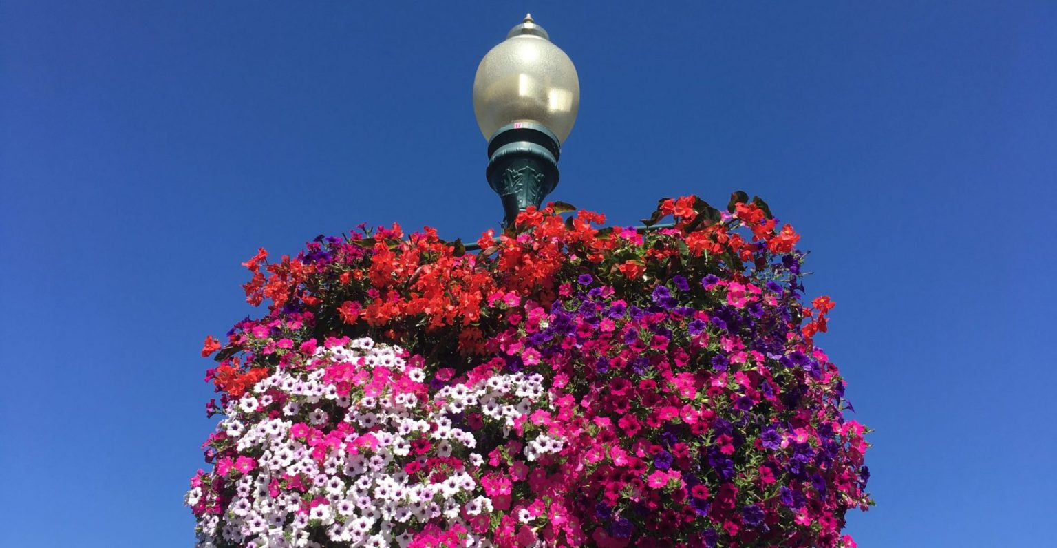 cropped-Hanging-Baskets-scaled-1.jpg